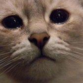 Cat tränende Augen