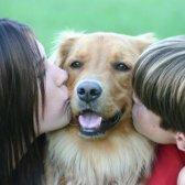 Kinderfreundliche 10 Hunde und Katzen