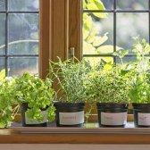 5 Ideen für Garten wachsen Lebensmittel in kleinen Räumen