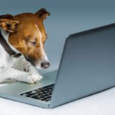 Hundebesitzer, freuen: 24/7 Zugang Tierarzt Online