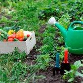 Die Chronologie des Gärtners, wenn zu pflanzen, Wasser und Kräuter und Gemüse Lebensmittel