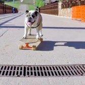 GoPro geht vor die Hunde mit einem Problem neue Fahrt Download