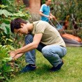 Hotline bietet Garten Tipps und kostenlose Rasen