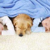 Kommentar In Anbetracht der Urin von Haustieren und Gerüche auf dem Teppich