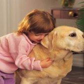 Wie zur Bekämpfung von Allergien gegen Hunde natürlich - 7 Tipps