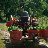 Link-Liebe: Kontroverse Bio-Zertifizierung, die Vorteile von Outdoor-Training und vieles mehr