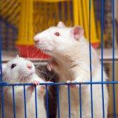 Medien Püree telepathische Ratten, Skydiving Zubehör und HIV Kuren