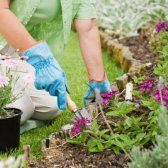 New Alarm App: Schädlinge Gartentipps