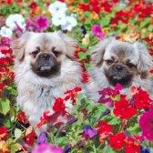 Ratschläge für Gärtner mit Haustier