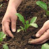 Smartgardener.com: virtuelle Unterstützung für Gärtner zum ersten Mal