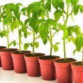 Das beste Gemüse für 4 Jahreszeiten zu wachsen