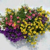 Top 10 Blumen hängenden Korb