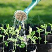 Top 15 Tipps und Tricks für Anfänger bis zum Garten