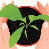 Welche Pflanzen sollten von & sollten nicht zusammen gepflanzt werden [Infografik]
