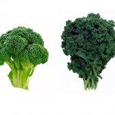 Warum sollte ein Kampf mit Brokkoli Kohl, wenn er nicht gewinnen kann?