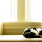 Kommentar Halten Sie Ihr Haus kühl ohne Klimaanlage