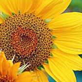 Symmetrie in der Blumen