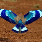 Symmetrie in der Natur