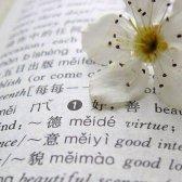 Unübersetzbar Worte über die Liebe