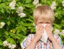 Atmen Sie einfach mit diesen Tipps zu nehmen Sie Ihre Anti-Allergie zu Hause