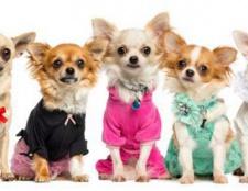 Bunte Kleidung für Haustiere