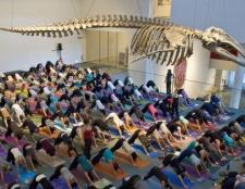 """Elena Brower flavorpill, Central Park, """"das größte Ereignis, das jemals dokumentiert Yoga"""""""