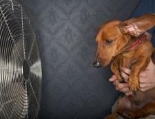 Die Hundstage des Sommers: pet Sicherheitstipps für heißes Wetter