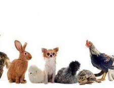 Tiere sind des Menschen bester Freunde