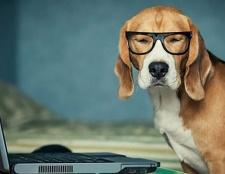 Wenn die Unternehmer erlauben Haustiere bei der Arbeit?